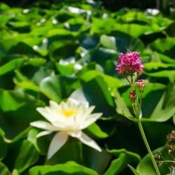 Soller Botanischer Garten