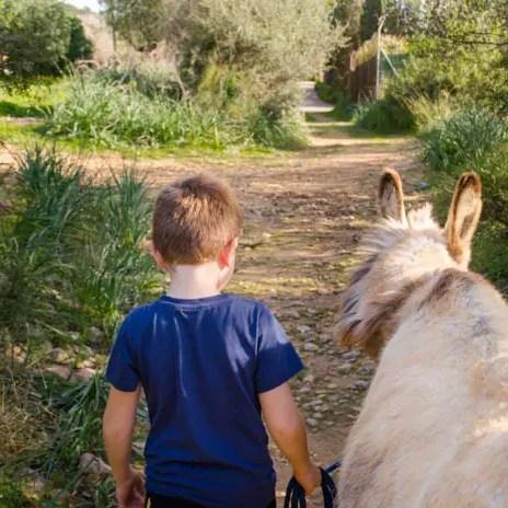 Wandern mit Esel auf Mallorca