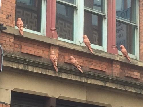 Terracotta Pigeons at Tib Street, Manchester @ Tolfalas.com