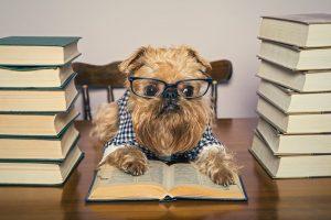 Find a good editor for novel
