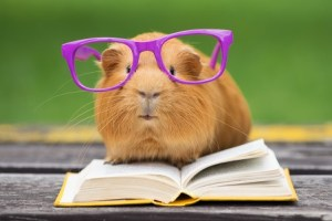 A hamster is performing developmental editing as a book editor