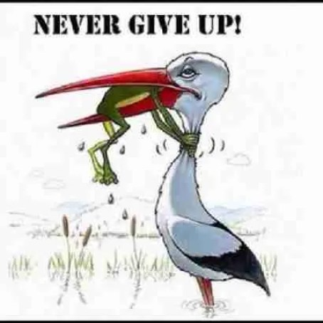 maltaway_balattiboardmember_never give up_animals