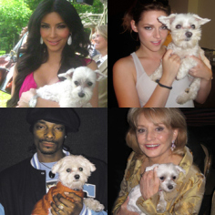 Celebrity Maltese Dog Owners