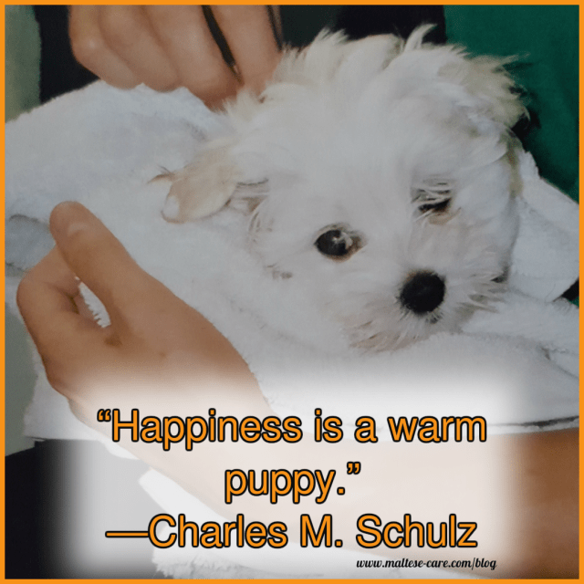 maltese dog quotes 12
