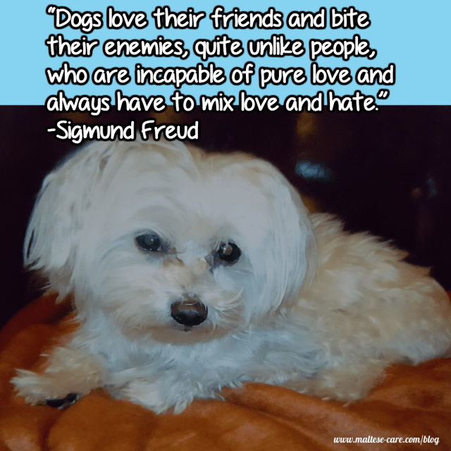 maltese dogs quotes 7
