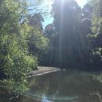 2017新年 森と川