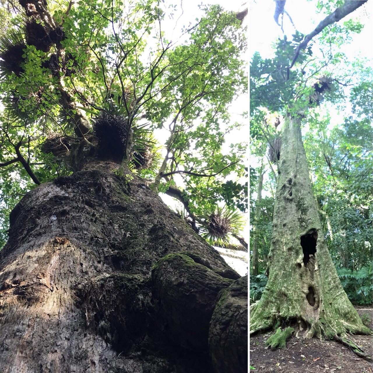 森の守り神