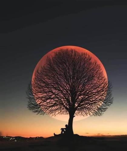 ay ağaç