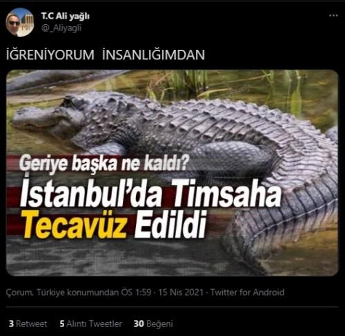 istanbulda timsaha tecavüz edildi iddiası