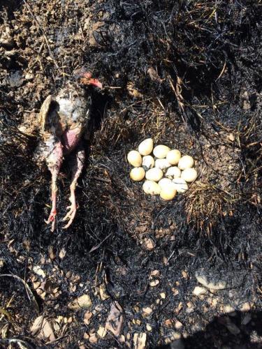 yumurtalarıyla ölen anne