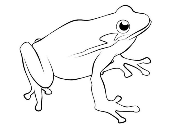 Ausmalbilder zum Drucken Malvorlage Frosch kostenlos 2