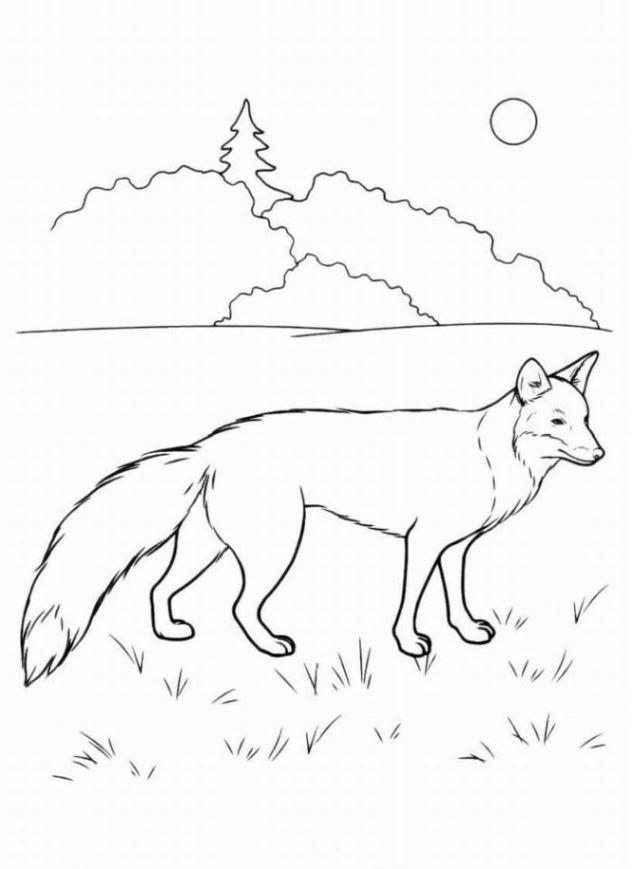 Ausmalbilder zum Drucken Malvorlage Fuchs kostenlos 2