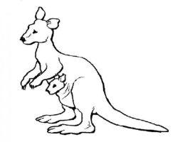 Ausmalbilder zum Drucken Malvorlage Känguru kostenlos 2
