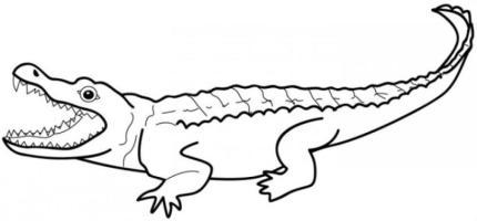 Ausmalbilder zum Drucken Malvorlage Krokodil kostenlos 4
