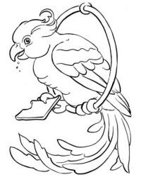 Malvorlagen von Papagei kostenlos zum Ausdrucken