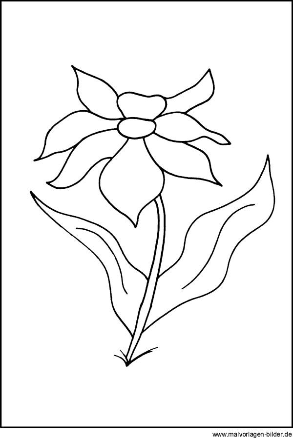 Kostenlose Malvorlagen - Blumen