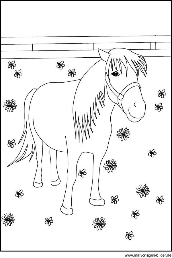 Malvorlage von einem Pony Kostenlose Ausmalbilder für Kinder