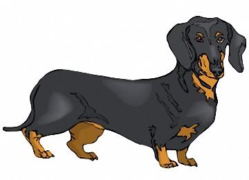 Dackel Hunde Bilder Zum Ausmalen