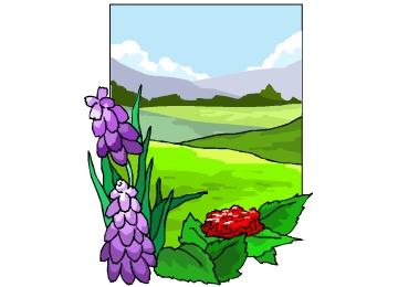 Malvorlagen Frühlingswiese