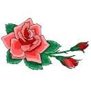 Rosen Malvorlagen