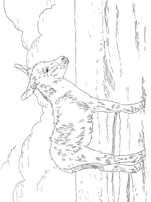 Esel Malvorlagen - Malvorlagen1001