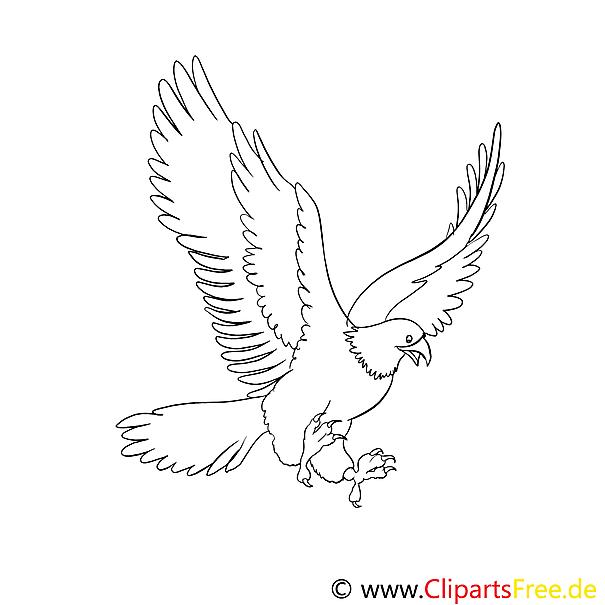 Adler Ausmalbilder Fr Kinder Gratis