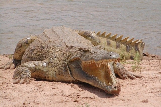 Kering, dopo i pitoni, si schiera dalla parte dei coccodrilli