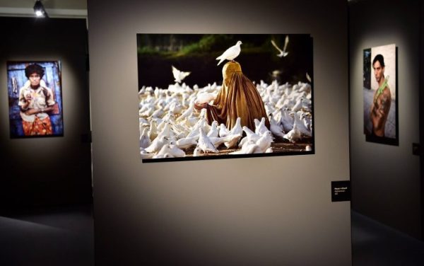 Mame arte STEVE McCURRY: ANIMALS La mostra