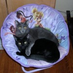 Wordless Wednesday – The Love of Cats!