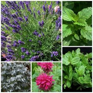 pest repelling plants