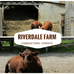 Riverdale Farm in Cabbagetown Toronto