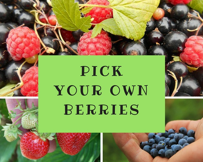 Pick Your Own Berries