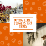 Drying Edible flowers and herbs