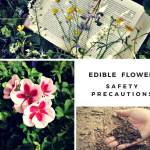 Edible Flower Safety Precautions – Be Aware of Plant Part Usuage