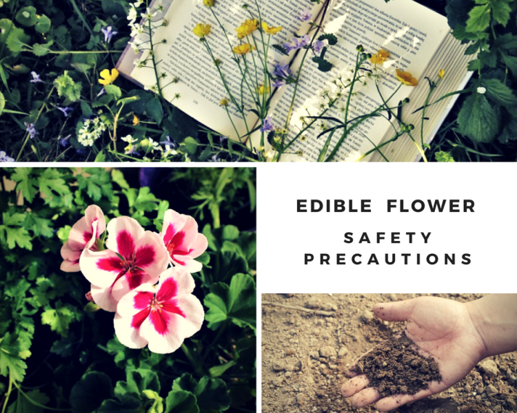 Edible Flower Safety Precautions