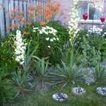 Back corner of my garden