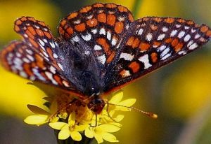 butterfly20seq35bg052602-main_full