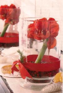 Amaryllis gift vase