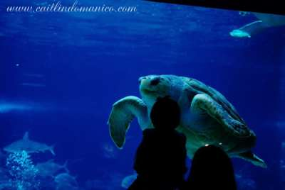 Coupon for camden adventure aquarium