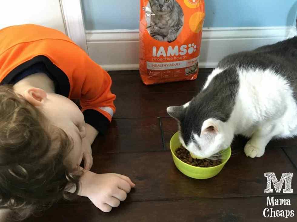 Landon Watching Cat Eat Food