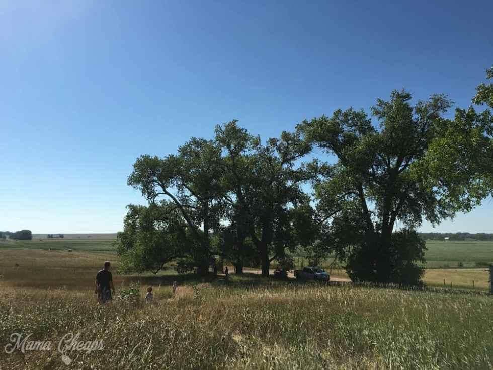 Ingalls Cottonwoods