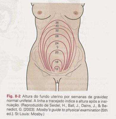 altura-uterina - mudanças físicas na gravidez
