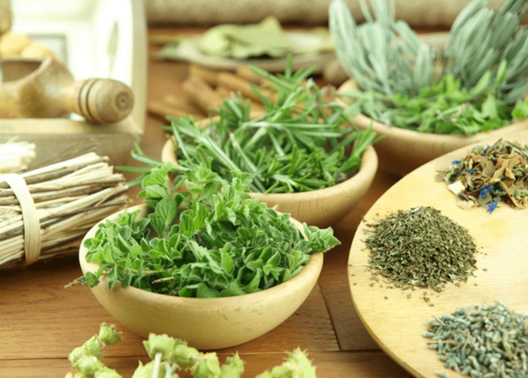 Plantas Medicinais Na Gestação E Amamentação: Pode Ou Não Pode?