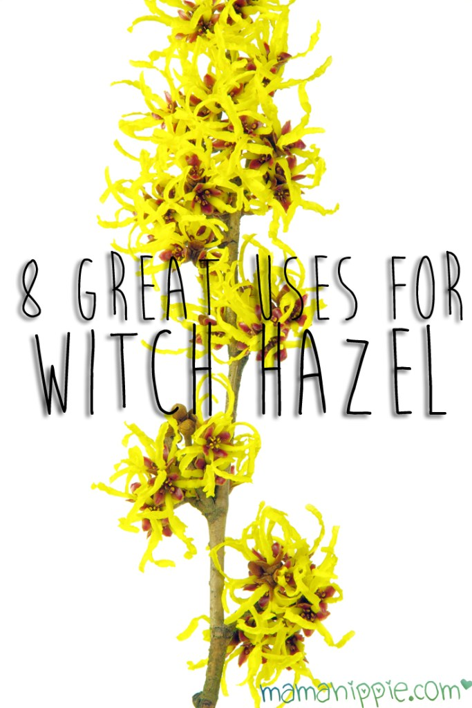 Witch Hazel is a must in any natural medicine cabinets. It has many uses.