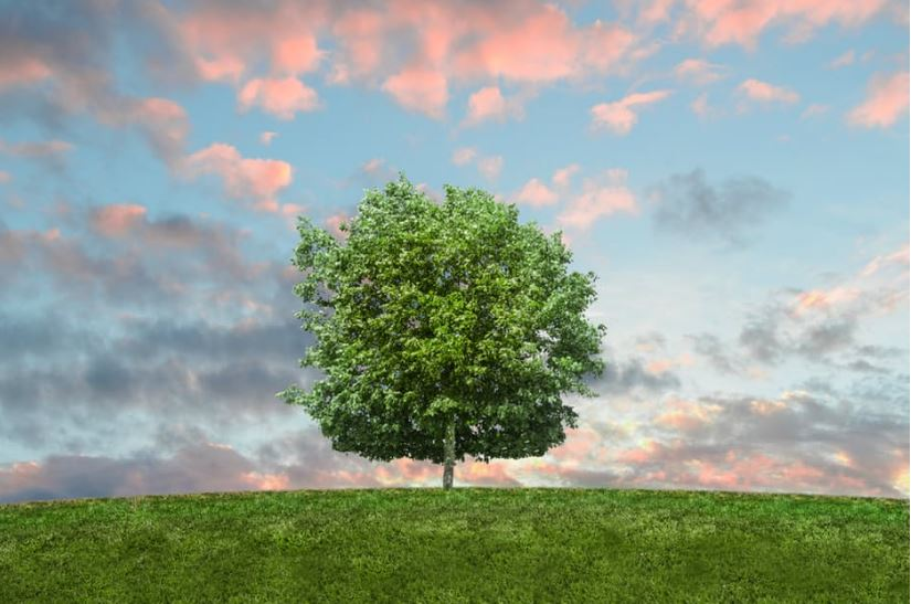 Do Your Bit For The Planet by Creating a Greener Home