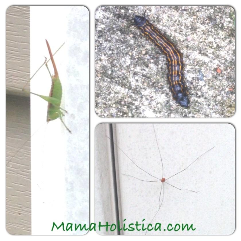Intenciones ~ Miércoles Mudo/Wordless Wednesday: Los Insectos de mi Jardín #MM