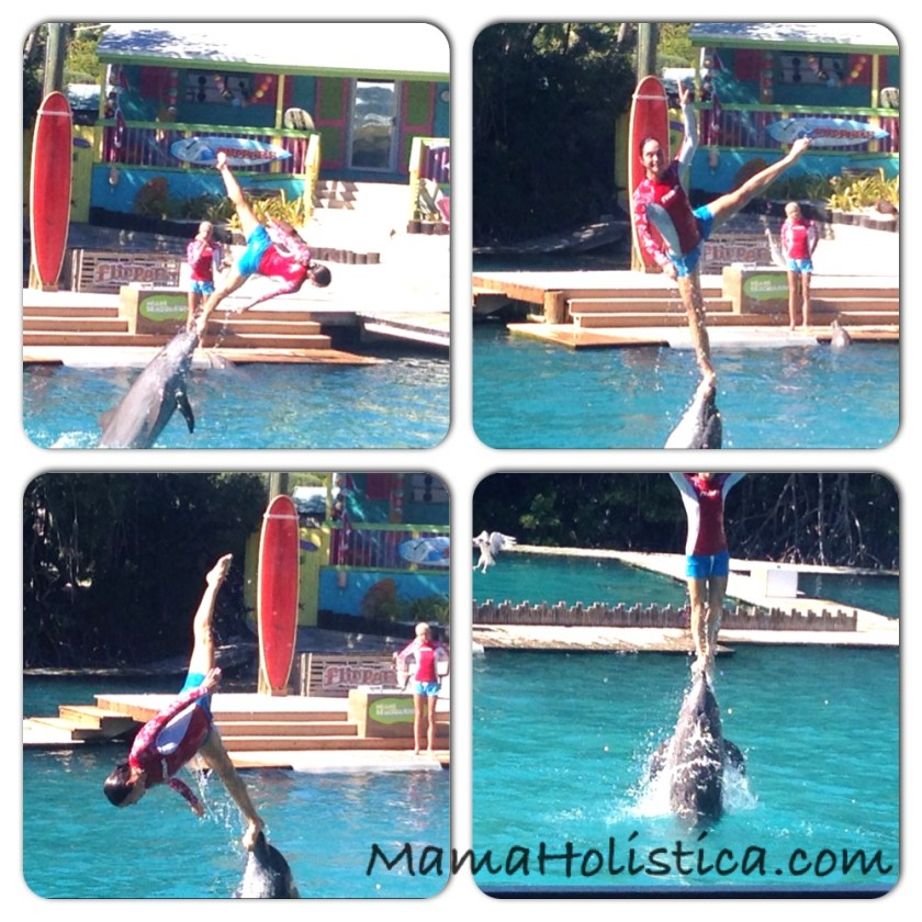 Intenciones ~ Miércoles Mudo/Wordless Wednesday: Flipper Show en Miami Sea Aquarium #MM
