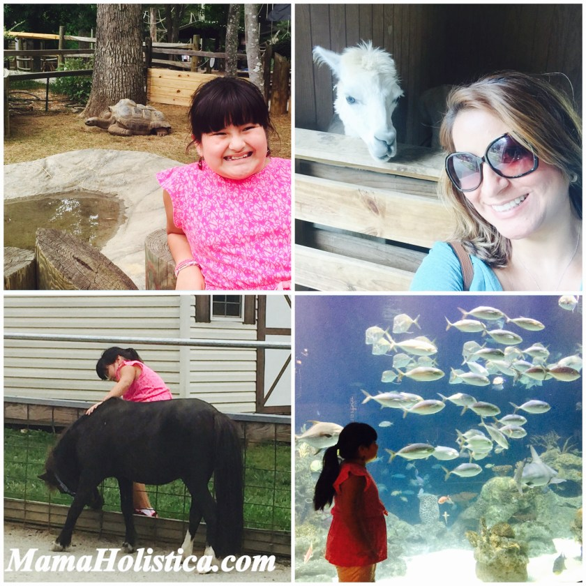 Miércoles Mudo / Wordless Wednesday: Nos encantan los Animales #MM