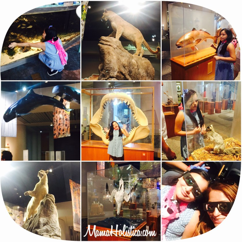 Miércoles Mudo/ Wordless Wednesday: Otra Aventura en el North Carolina Museum of Natural Sciences #MM