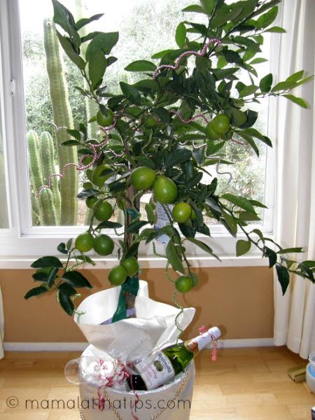 Tree_cider_mamalatinatips